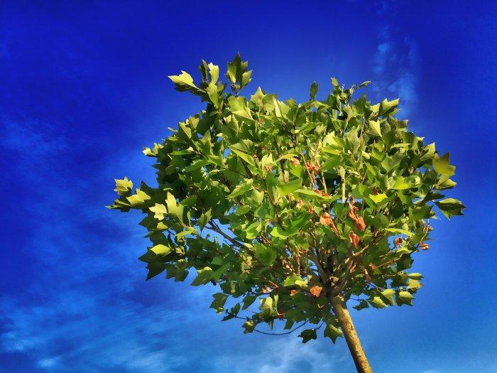 tree-824429_1280