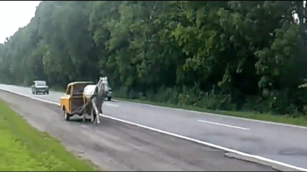 Horse pulling car
